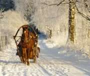 HORSE SLEDGE AND TRADITIONAL LATVIAN SAUNA