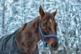 HORSE SLEDGE AND TRADITIONAL LATVIAN SAUNA