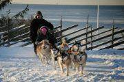 Husky Tallinn