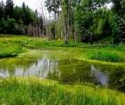 Somaa national park
